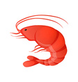 Red shrimp vector image