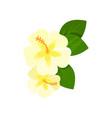 frangipani tropical flower cartoon vector image