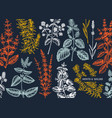 mint plants design hand sketched mints background vector image