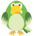 green parrot on white background vector image