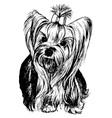 Yorkshire Terrier vector image