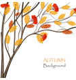 autumn rowan tree for use in your design vector image