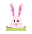 cute rabbit face vector image