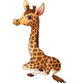 little giraffe calf sitting vector image