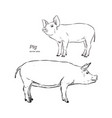 pig in graphic style hand drawing vector image vector image