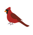 red cardinal vector image vector image