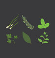set of drawing herbs and flowers isolated vector image vector image