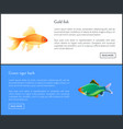 green tiger barb goldfish double color fond vector image vector image