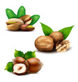 set of realistic nuts with leaves vector image vector image