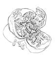Sketch of garnet vector image vector image