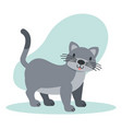 cat pet animal vector image
