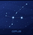 constellation grus crane night star sky vector image vector image