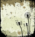 floral background dandelion vector image vector image