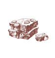 chocolate bar pieces with hazelnut hand drawn vector image