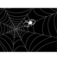 cobweb with a spider in center against night vector image vector image