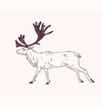 male deer reindeer or stag with gorgeous antlers vector image vector image