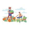 man and woman harvesting gather squash and pumpkin vector image