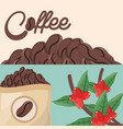 coffee beans tree sac fresh vector image vector image