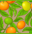mandarin pattern on color background vector image vector image