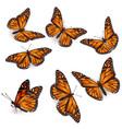 orange tropical flying butterflies vector image