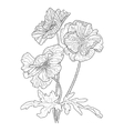 Poppy flower coloring book for adults vector image