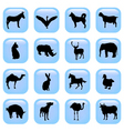 animal buttons vector image vector image