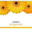 floral background with yellow gerbera vector image