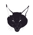 portrait of a lynx silhouette drawing vector image