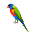 rainbow lorikeet tropical exotic vector image