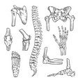 sketch icons of human body bones and joints vector image vector image
