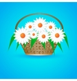 summer basket with daisies vector image