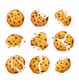 oatmeal cookie chocolate crumbs isolated vector image