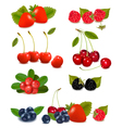 summer berries vector image vector image