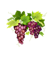 three bunches grapes hanging vector image vector image