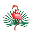 exotic flat summer print with flamingo and vector image