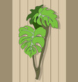 plant on the background of a wooden wall vector image vector image