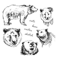 hand drawn of a bear in the different vector image