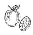 fruits exotic fruits vegetarian - minimal vector image vector image
