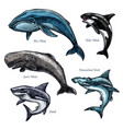 Giant sea animals whale and shark icons set
