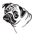 image pug dog on white background vector image