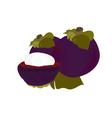 Mangosteen vector image vector image