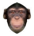 Head of a monkey in triangle style vector image