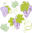 creative grapes set elements vector illustration vector image
