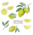 lemon watercolor collection vector image vector image
