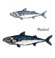 mackerel fish isolated sketch icon vector image vector image