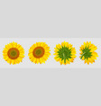 blooming sunflower realistic sunflowers vector image vector image