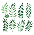 collection painted watercolors plants and vector image vector image