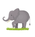 elephant isolated design vector image