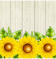 green leaves and sunflowers vector image