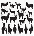 lama silhouettes vector image vector image